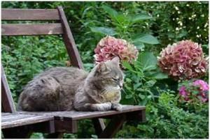 cat garden 1